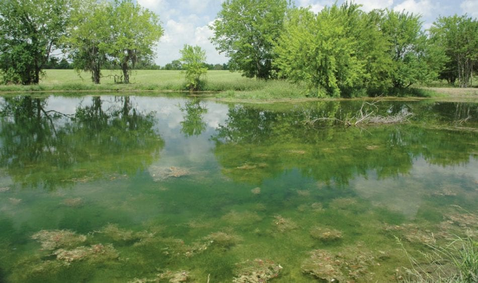 FERTILIZING LAKES & PONDS DURING SUMMER: AVOIDING POTENTIAL PROBLEMS