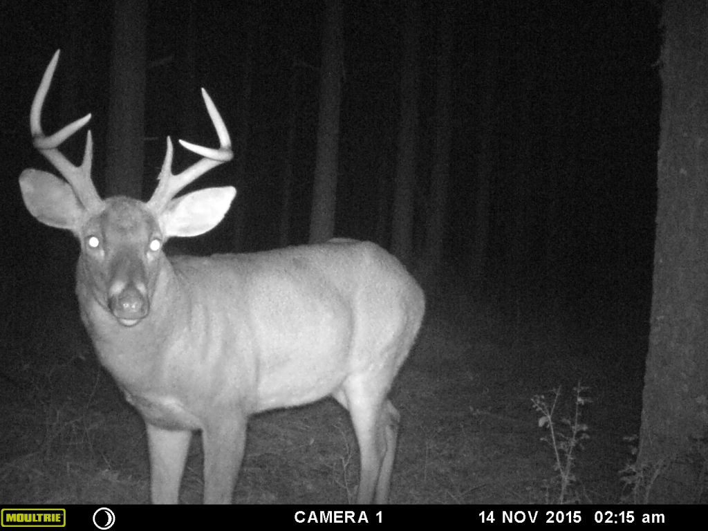 Late Season Mishaps – Controlling the Trigger