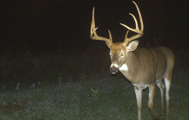 Trail Cameras – They're not just for hunters